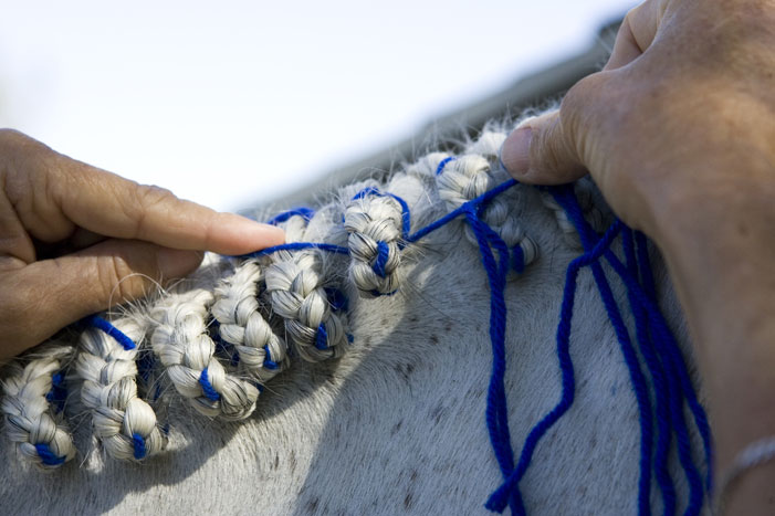 Horse Mane Braiding Step 22