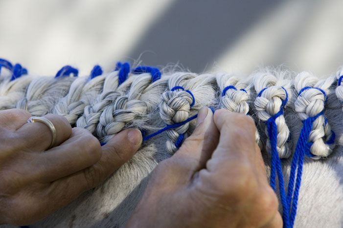 Horse Mane Braiding Step 24