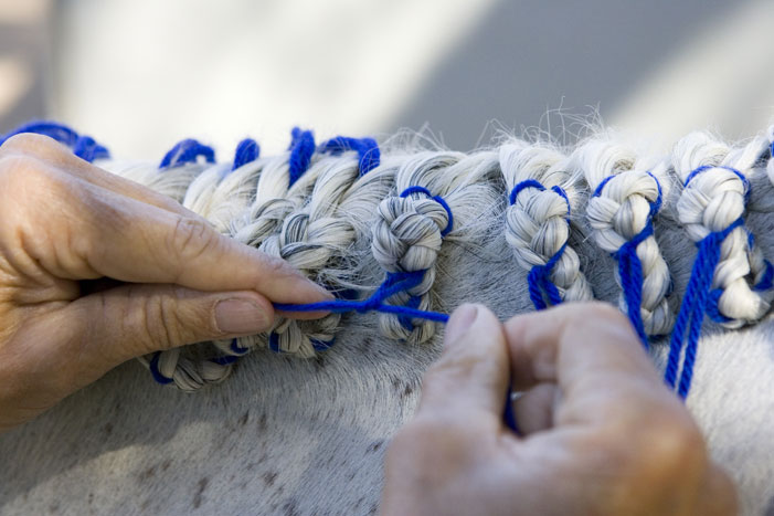 Horse Mane Braiding Step 25