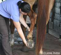 Keep your horse's joints healthy with a good diet and stretching