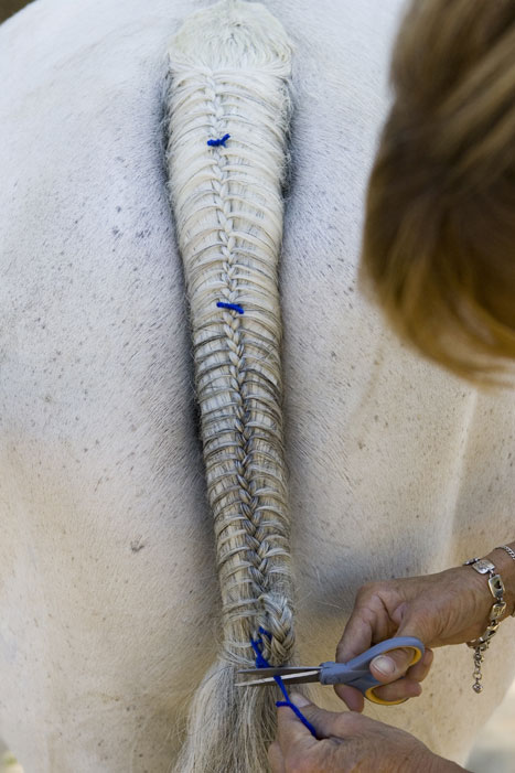 Tail Braiding Step 16