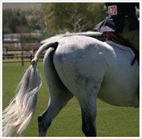How to Braid Your Horse's Tail