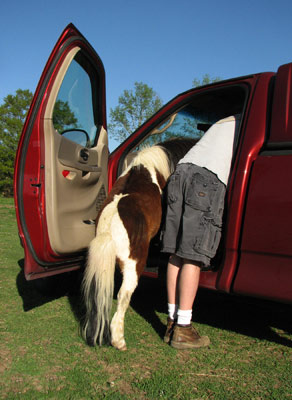Pony and friend in car