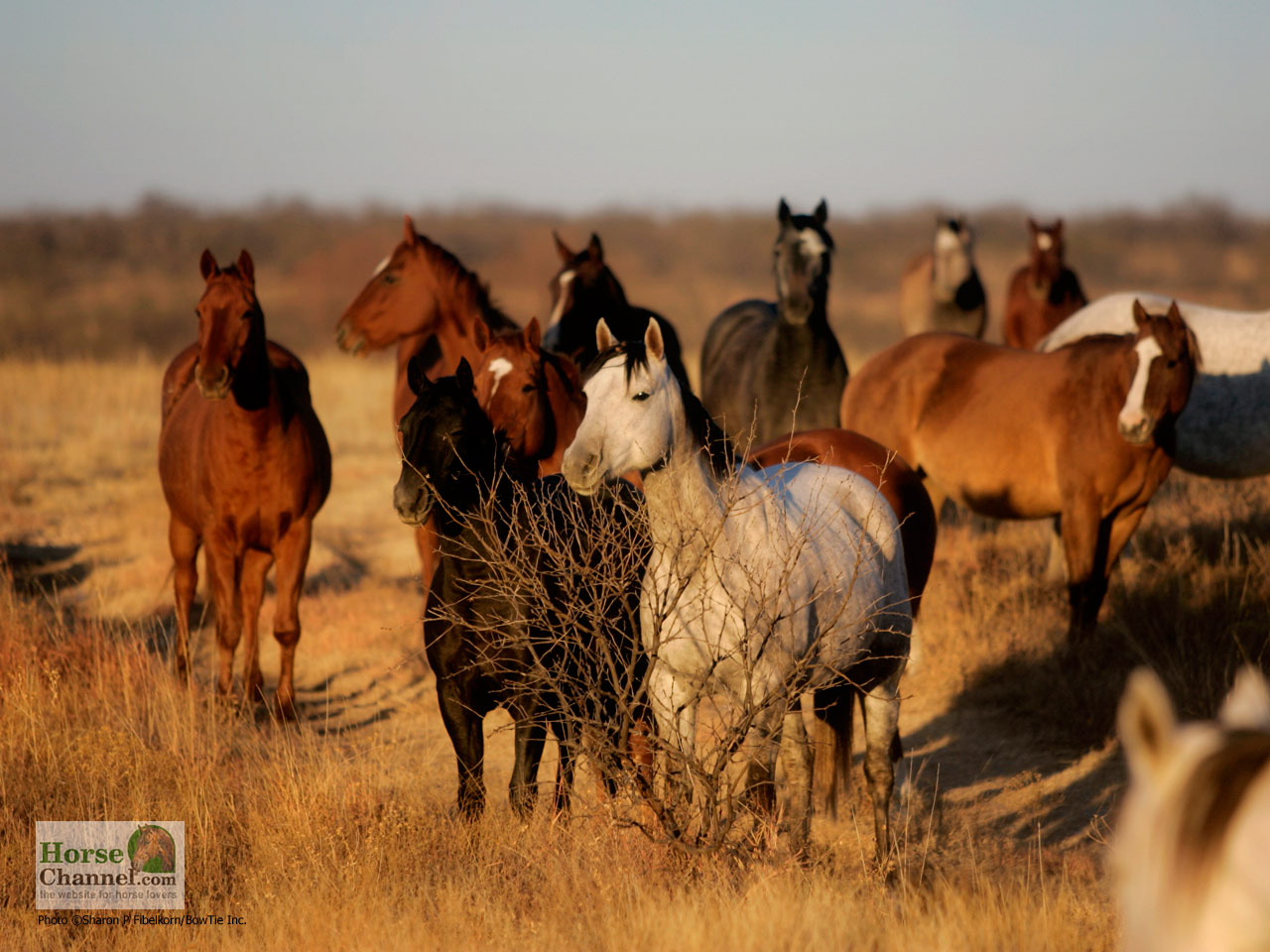 Ranch Horse Desktop Wallpapers Horse Illustrated