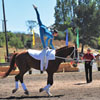 2010 World Equestrian Games- Vaulting