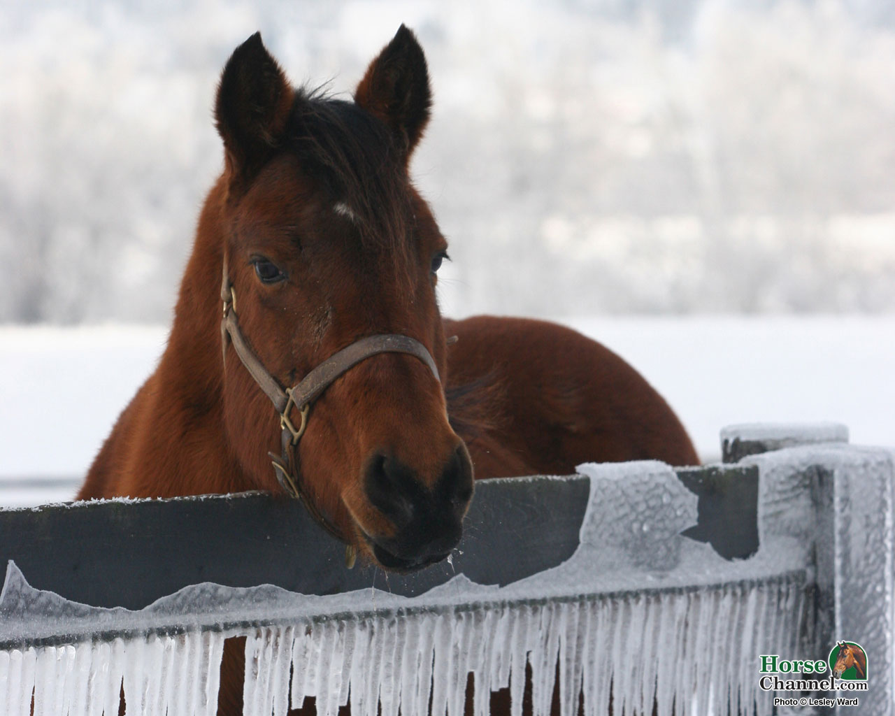 Image result for winter horse