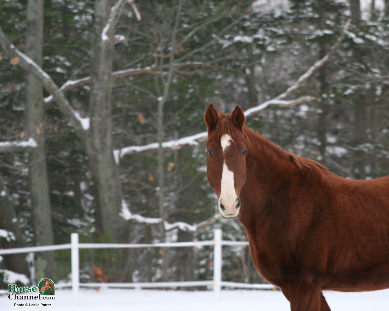Winter Equine Screensaver And Wallpapers Horse Illustrated