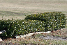 Well trimmed hedges and other natural obstacles can be used as well