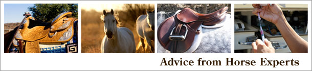 Advice from Horse Experts