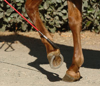 Gaining control of your horse's feet