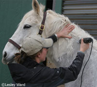 Tips on clipping your horse's thick winter coat
