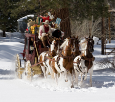 Pinto Saddlebred horses with a Christmas stagecoach