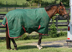 A too large blanket for your horse