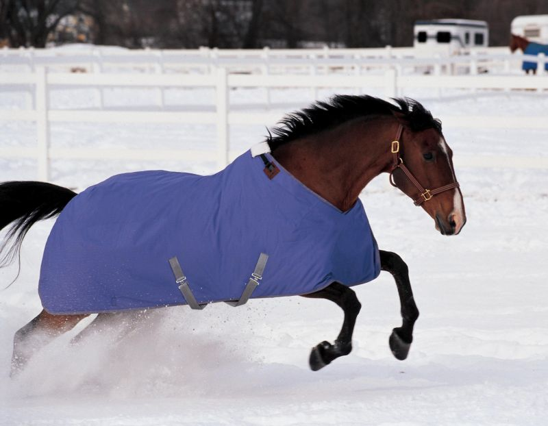 Field Guide To Horse Blanket Styles