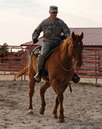 Fort Bragg's 36 horses are used for training and other jobs