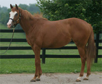 KyEHC Horse of the Week: Ticket to the Poor House