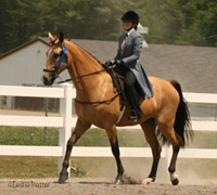 Flat shod Tennessee Walking Horse