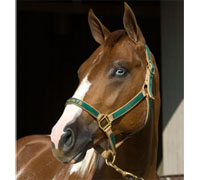 Paint filly Gay Bars Christi to be auctioned at APHA Fall Championship