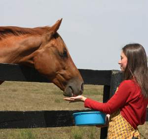 Treat your horse with these easy-to-make snacks