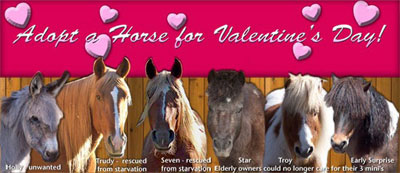 The AHS is offering the abililty to adopt a horse online for kids