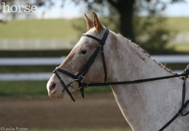 Appaloosa English Bridle