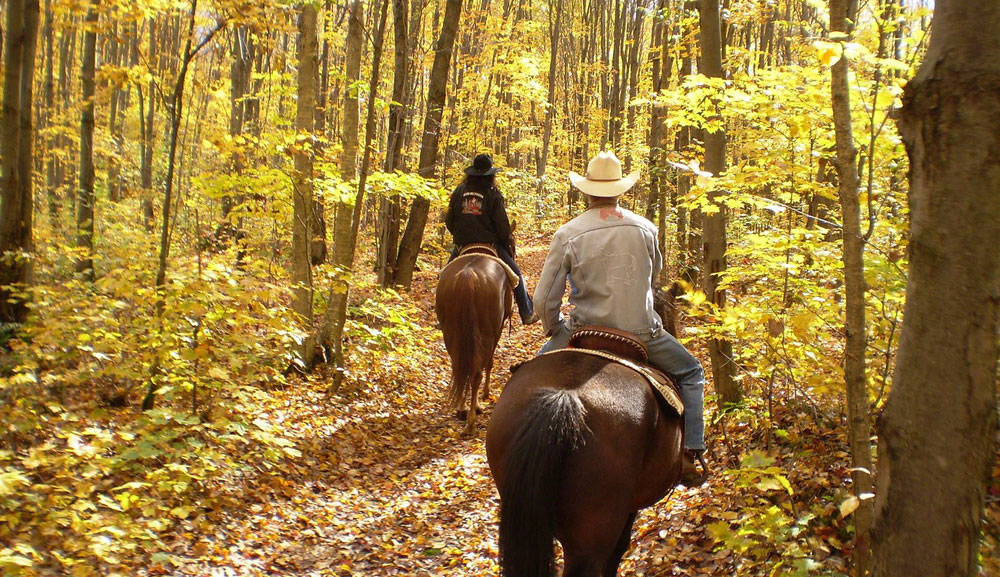 Trail Riding in Autumn Woods