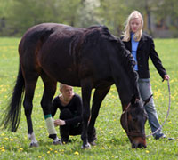 Tips on how to handle wounds on your horse