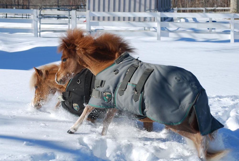 Gentle Carousel Therapy Horses in the Snow