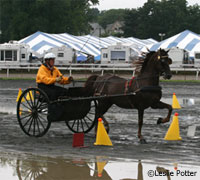 Carriage driving competition