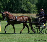 Carriage driving horse