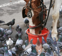 Four-legged animals are more likely to present a health threat to your horse than birds