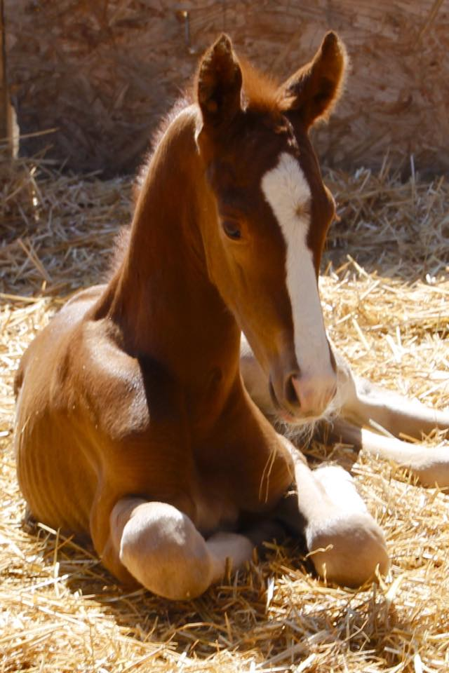 Foal Photos