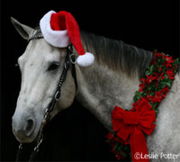 Celebrate the holidays with your best equine friend with some tips from HorseChannel.com