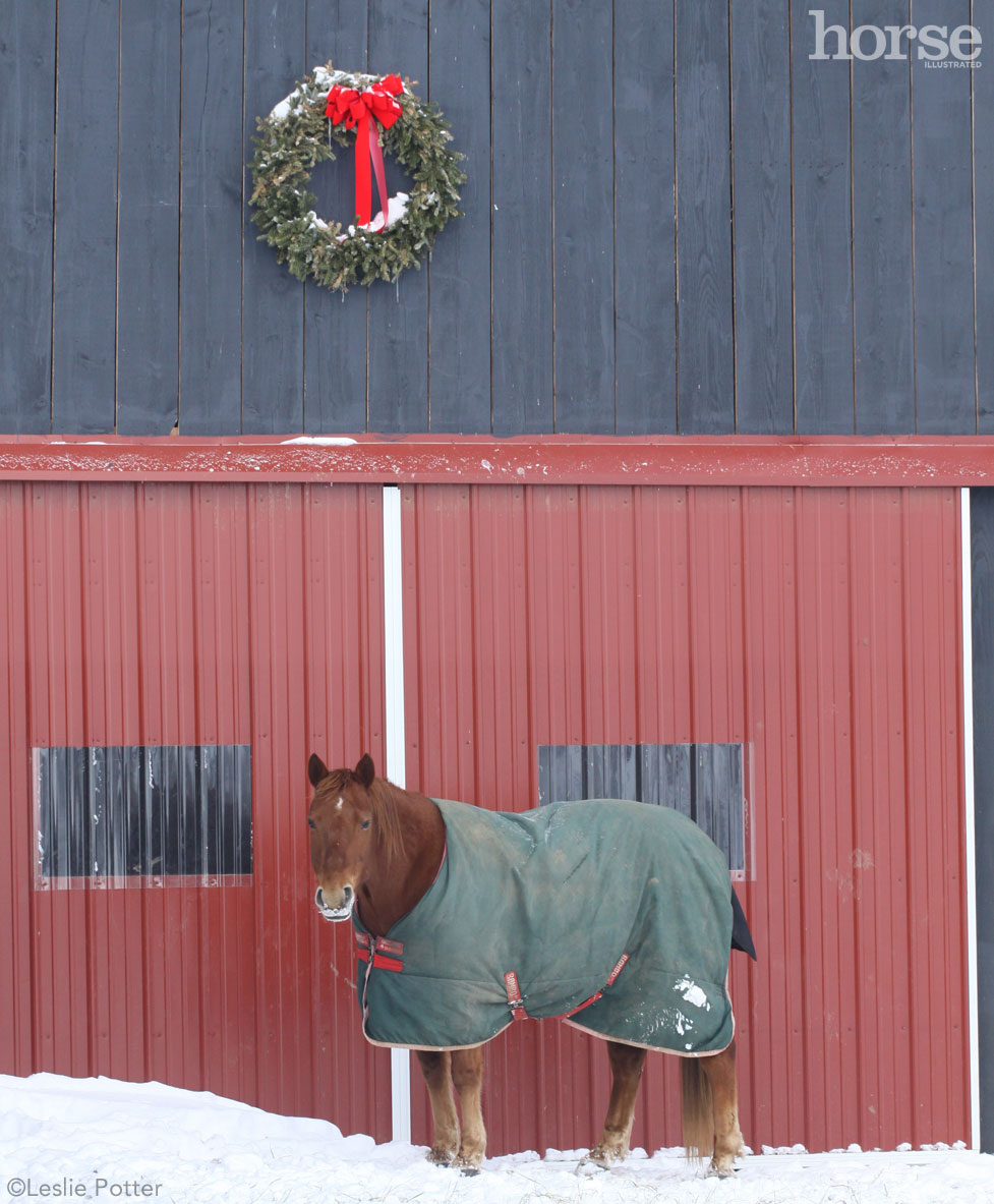 Christmas Wreath and Pony