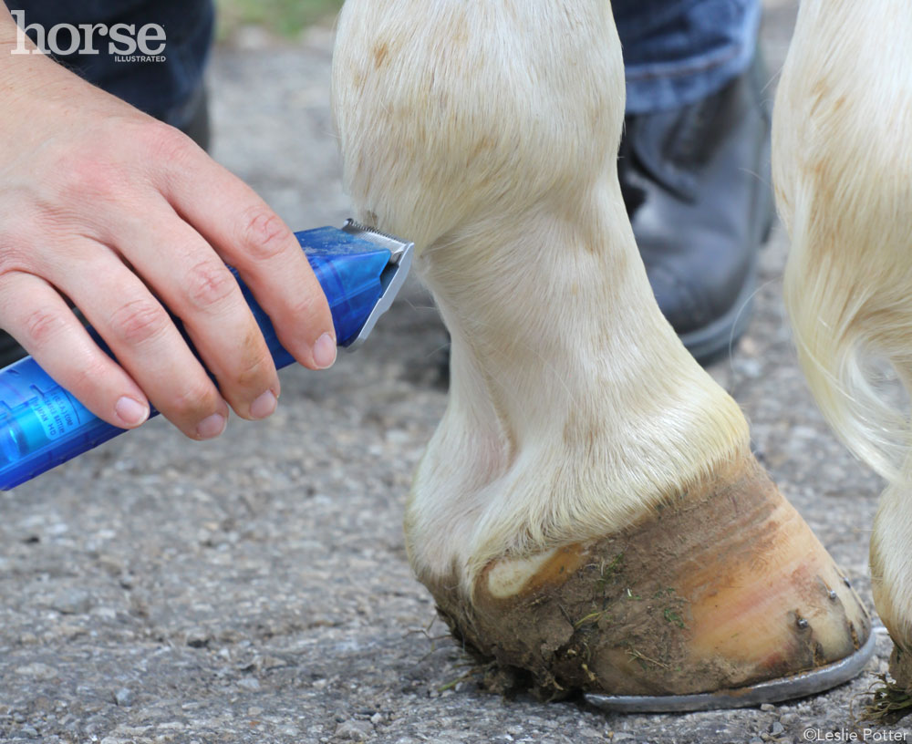 Clipping Lower Legs