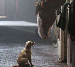Training Horses for the Silver Screen