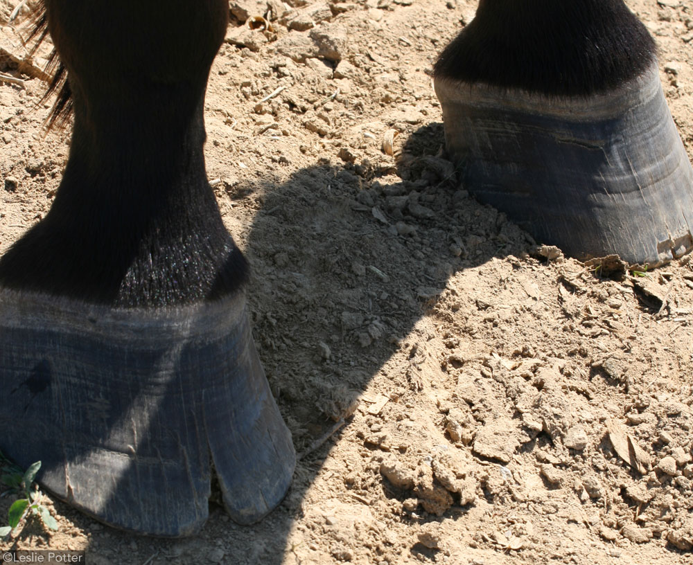 Cracked Horse Hooves
