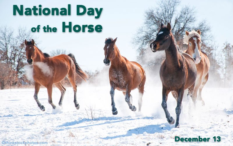 Day of the Horse