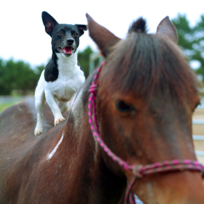 Help your canines and equines learn to get along