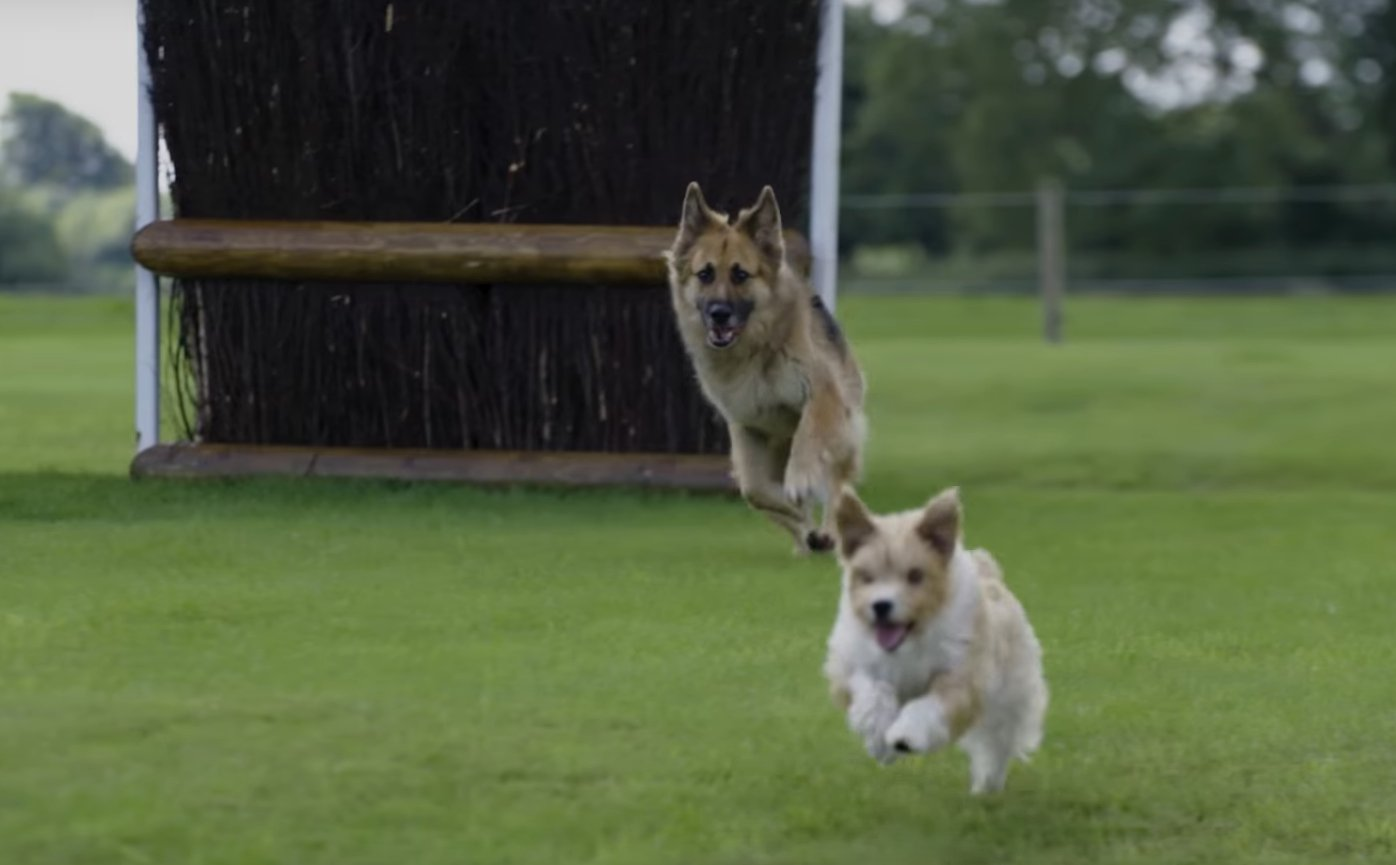 Dogs at Burghley