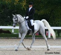 Arabian dressage horse