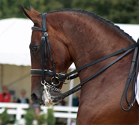The Dressage at Devon dressage show is held every year in Pennsylvania