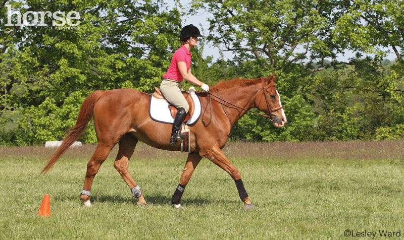 Interval Exercise for Horses