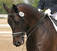 Search for the Next American Equestrian Star: Dressage is available for purchase online