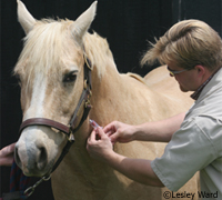 The UHVRC program makes vaccines free at equine facilities across the U.S.