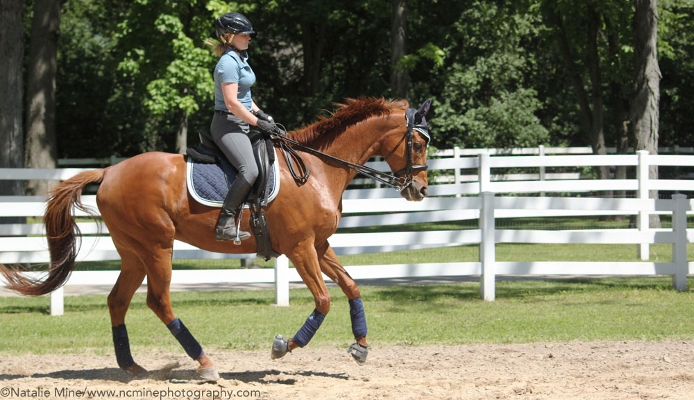 Fitbit for Equestrians