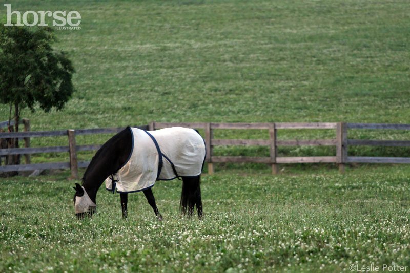 Horse wearing a fly sheet and fly mask