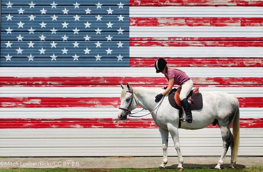 Gray Horse in front of American Flag