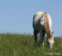 The Horse Owner's Field Guide to Toxic Plants lists common plants toxic to horses