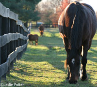 Pasture care is important to keeping your horse healthy